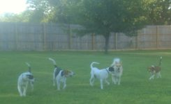 Dogs Playing out Back at A New Leash Lodge in Huntsville AL