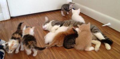 Kitten Room at A New Leash Lodge in Huntsville AL