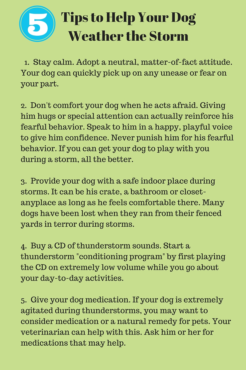 Tips to Help Your Dog Weather the Storm-2