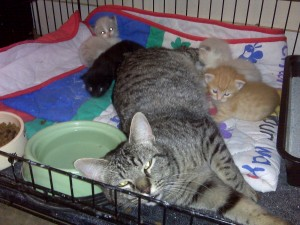 Sweet Mom Nursing Kittens who are not hers